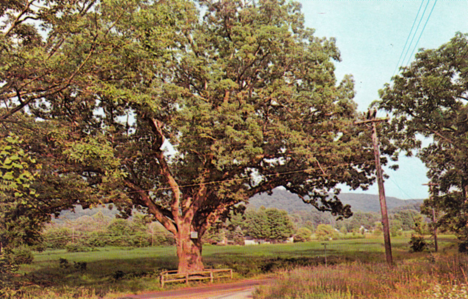 Washington Oak, Gaylordsville